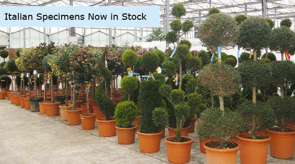 Our Customer Base Includes Growers Independent Garden Centres Landscapers And Designers Local Authorities Landowners Developers Stately